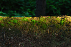 Moss stock images