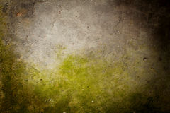 Moss. An image of a concrete wall with moss Royalty Free Stock Photo