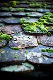 Moss. On a antique, old tiled roof. Shallow DOF Stock Image
