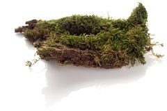 Moss. A piece of moss shot against white background Royalty Free Stock Image