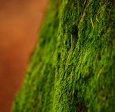 Moss. Growing on the north side of a tree in forest Stock Photos