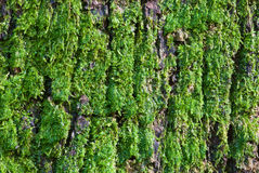 Moss Stock Photos
