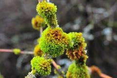 Moss Royaltyfri Fotografi