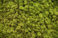 Free Moss Royalty Free Stock Images - 35701219