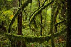 Moss. Old forest growth - cycles of rebirth and decay in a natural environment stock image