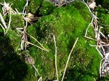 Moss Arkivfoton