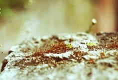 Moss Royaltyfri Bild