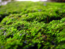 Moss. Close up of moss covered stone Royalty Free Stock Photography