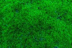 Moss Arkivbilder