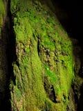 Moss. Very green moss into a cavern Stock Photos