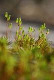 Moss. Closeup stock image