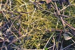 Moss arkivbild