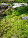 Moss arkivfoto