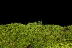 Moss against black background Stock Photo