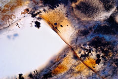 Moss Agate-Licht Lizenzfreies Stockfoto