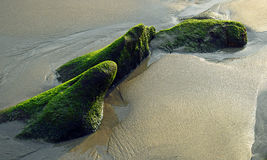 Moss and algae covered covered rocks on beach sand at low tide in Laguna Beach, California. Stock Photography