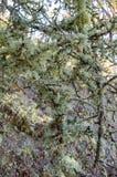 Moss. On Alushta. Dimerdgi wood Stock Photo