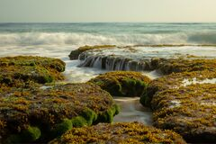 Moss And Algae Covering Rocks Royalty Free Stock Photography