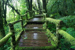 Moss around the wooden walkway in rain forest royalty free stock photography