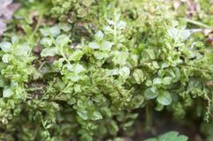 Moss as a background Stock Photos