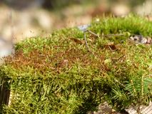 Moss. In autumn Royalty Free Stock Images