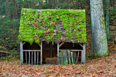 Moss and autumn leaves covered roof of a sheep pen Royalty Free Stock Photography