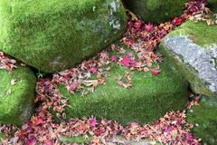 Moss and autumn leaves Stock Photo