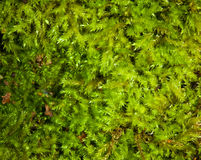 Moss background Stock Photos