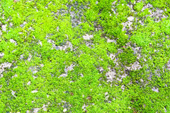 Moss background Royalty Free Stock Images