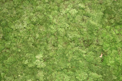 Moss background Stock Photography