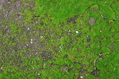 Moss background Stock Image