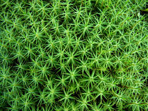 Moss background Royalty Free Stock Photos