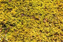 Moss Background Fotografía de archivo