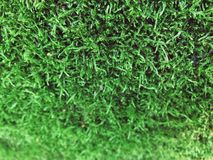 Moss Background Fotografia Stock