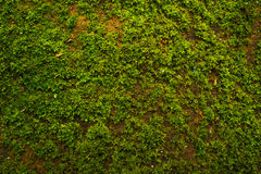 Moss Background Photographie stock libre de droits