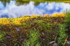 Moss background  above the river landscape Royalty Free Stock Photo