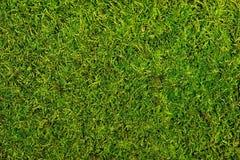 Moss. Background of moss close up Stock Photos