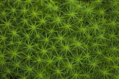 Moss background Royalty Free Stock Photography