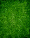 Moss background Stock Images