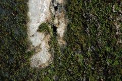 Moss Background imagem de stock