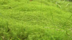 Moss Background Texture video d archivio