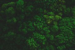Moss Background Texture atmosférico imágenes de archivo libres de regalías