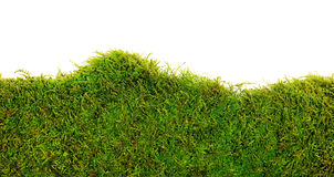 Moss. Background of moss on white background Royalty Free Stock Photo