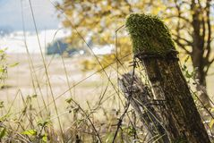 Moss and barbed wire stock images