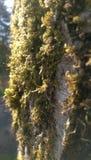 Moss. On bark Stock Photo