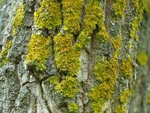 Moss On The Bark Of amarelo um tronco de árvore no outono fotografia de stock