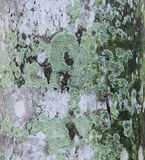 Moss on bark of tree Royalty Free Stock Images