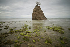 Moss Of Batu Luang Stock Image