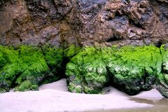 Moss at the Beach Stock Image