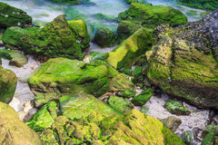 Moss Beach Royalty Free Stock Photo